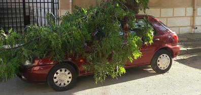 Паднали клони от дърво върху лек автомобил