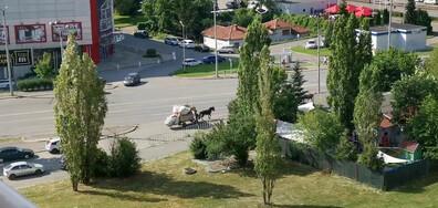 Коне из столицата на България