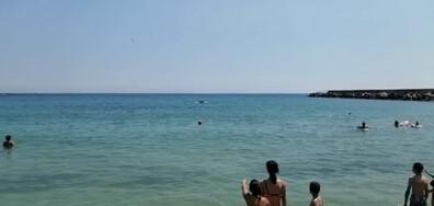 Делфин на метри от плажа