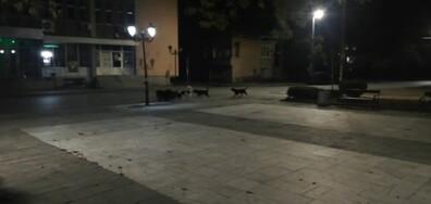 Глутници кучета