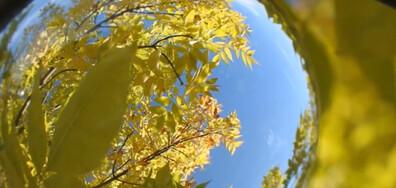 Златна есен, събрана в сферата!
