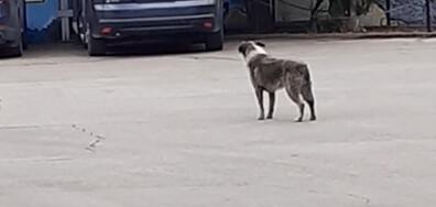 Куче седи мирно за Ботев и вие със сирената!