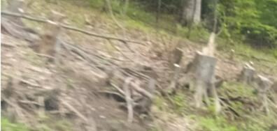 Сеч на гори