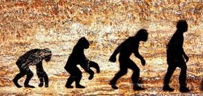 Испански и естонски учени откриха неизвестен прародител на човека