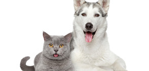 Стопани предизвикват кучетата си в нова интернет лудост (ВИДЕО)
