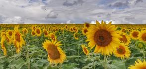 Задава ли се топлото и слънчево лято?