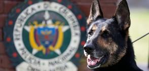 СИЛЕН НЮХ: Полицейско куче надуши четвърт милион евро на летище