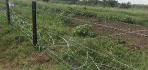 Откриха Африканска чума при дива свиня в Силистренско