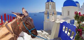 Пълните туристи няма да яздят магарета на остров Санторини