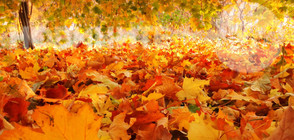 Какво време ни очаква през есента