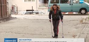 Бездомно куче нападна и жестоко нахапа жена в Пазарджик