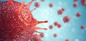 Учени откриха вирус, който се бори с рака