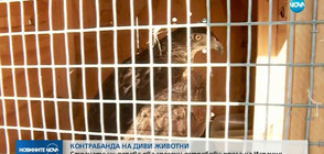 България дарява два спасени от контрабанда ястребови орела на Испания