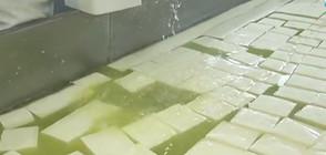 Тонове сирене и кашкавал залежават в мандрите (ВИДЕО)