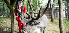 Дядо Коледа започна да отговаря на писмата с поръчки