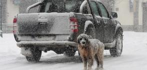 Първи сняг за тази зима заваля в Гърция (ВИДЕО+СНИМКИ)
