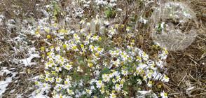 Жълт код за сняг и дъжд в цяла България в понеделник