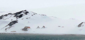 Антарктиците вече са на о-в Ливингстън