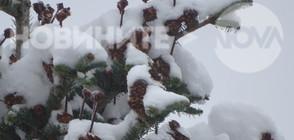 ЗИМАТА ИДВА: Кога и къде ще вали сняг? (ВИДЕО)