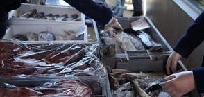ПРЕДИ НИКУЛДЕН: Засилени проверки на търговците на риба