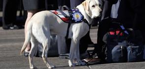 ТРОГАТЕЛНО: Кучето на Буш-старши лежи до ковчега му (СНИМКА)