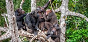 """""""Островът на маймуните"""" в Либерия плаши местни и туристи (ВИДЕО+СНИМКИ)"""
