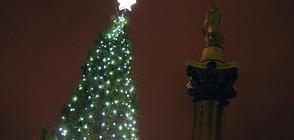 Запалиха светлините на коледната елха в Лондон (СНИМКИ+ВИДЕО)