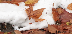 ЗА КЛИМАТИЧНИТЕ ПРОМЕНИ И ВРЕМЕТО: Кога ще има сняг?