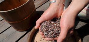 Черният ориз – идеалното средство за отслабване
