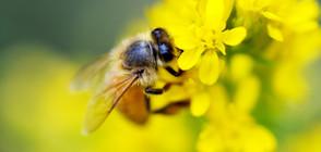 Пчели, роботи и маймуни - герои на най-странните истории през 2018 г.