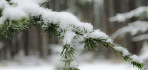ПРЕДПРАЗНИЧНА ПРОГНОЗА: Ще има ли сняг на Коледа?