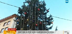 Кметове в спор коя е най-високата елха у нас (ВИДЕО)