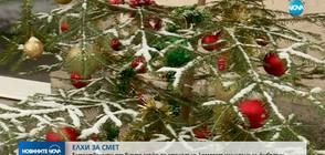 60 000 естествени елхи са отсечени за Коледа в България