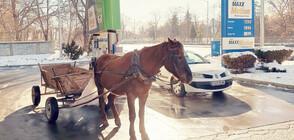 """ОТ """"МОЯТА НОВИНА"""": Кон """"зарежда"""" на бензиностанция"""