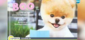 Почина Бу - най-сладкото куче на света