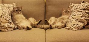 Котките – най-мързеливите същества (ГАЛЕРИЯ)