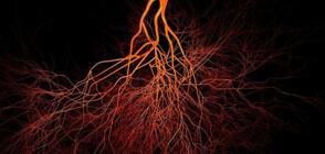 Учени откриха нов вид кръвоносен съд в костите
