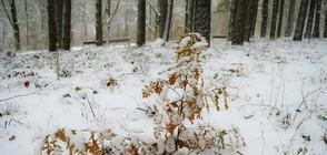 Какво ще бъде времето в началото на февруари?