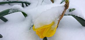 ФЕВРУАРСКА ПРОЛЕТ: Няколко дни топло време, но идва застудяване
