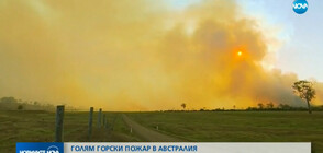 Огромен горски пожар изпепели къщи в Австралия (ВИДЕО)