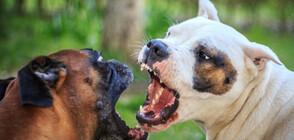 Близо 60 души са задържани за незаконни боеве с кучета