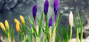 ВРЕМЕТО ДО КРАЯ НА ФЕВРУАРИ: Идва ли пролетта?