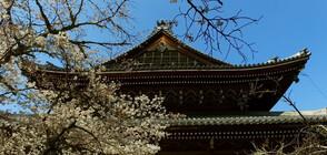 """""""Без багаж"""" в традиционните японски домове"""