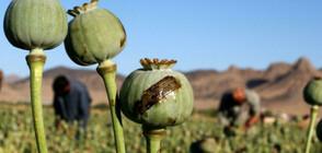 Афганистанският хероин тръгва по нови маршрути