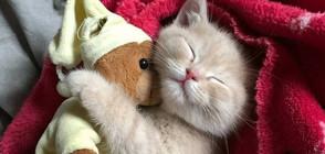 Пухкави животинки и техните плюшени играчки (ГАЛЕРИЯ)
