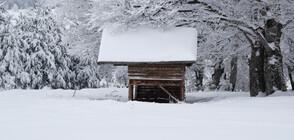 Зимата се завърна: Дъжд, сняг и силен вятър в цялата страна