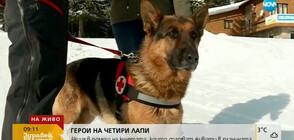Стартира кампания в помощ на кучетата, които спасяват хора в планината