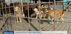 7 месеца условна присъда за жесток побой над домашно куче