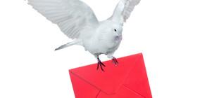 Продадоха пощенски гълъб за 1,25 млн. евро