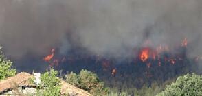 Голям пожар край Петрич, горят 150 декара черен и бял бор